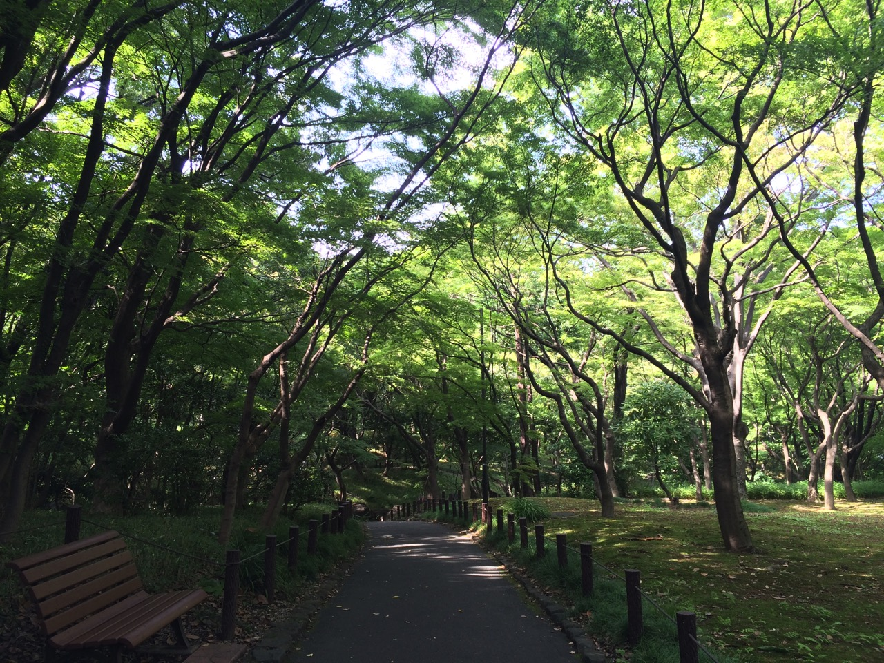 Walking path at Kitanomaru Park