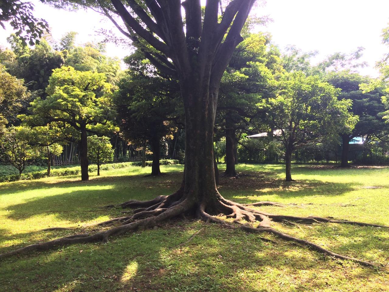 Tree at Kitanomaru Park