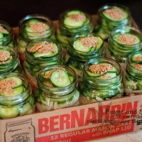 Mennonite Refrigerator Pickles [Recipe]