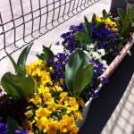 園芸療法;秋のプログラム