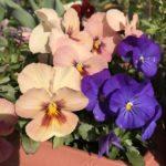 春!園芸療法の楽しい季節。早春のプログラムでいいもの作りましょ。