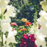 園芸療法士の資格を取得すべき?資格を取るにはどうしたらいいの?