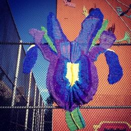 Blue Iris Yarnbomb
