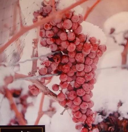 Ice wine – vinho por quem entende de vinho (warming)…