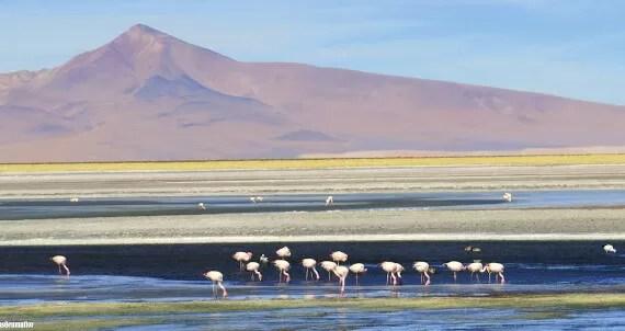 Salar de Tara, Atacama – passeio e trekking personalizados no deserto