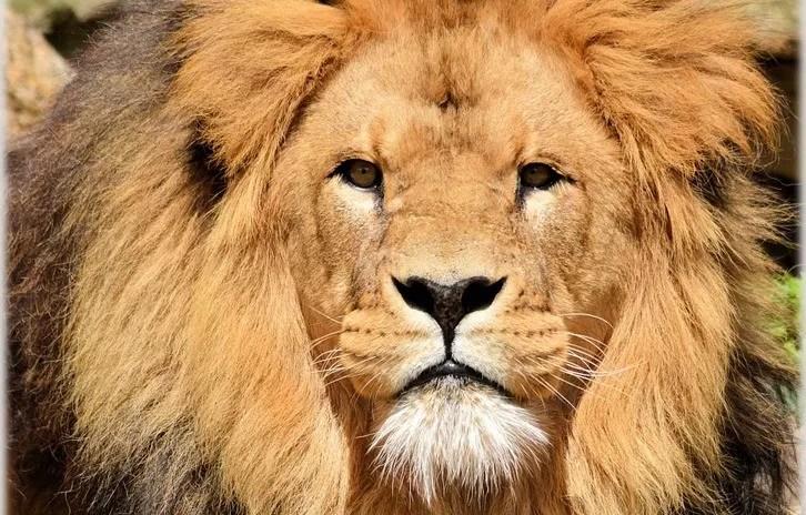 Imposto de Renda 2018: Preparado para enfrentar o leão?