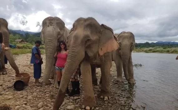 Por que andar de elefante não é uma boa ideia?