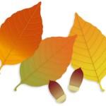 秋はいつも寂しい気持ち。理由はなに?どうして毎年なるのだろう!?