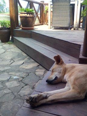 バードネストアイドル犬