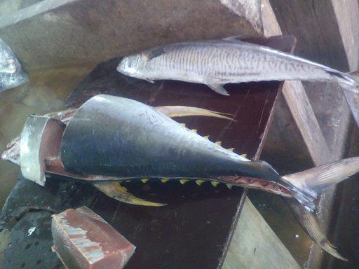 Zanzibar fish market3