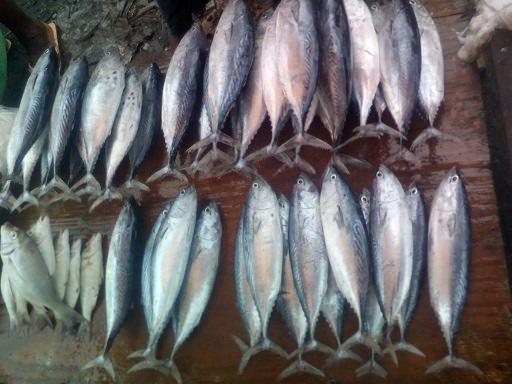 Zanzibar fish market4