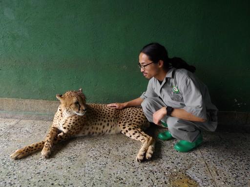 Cheetah touch