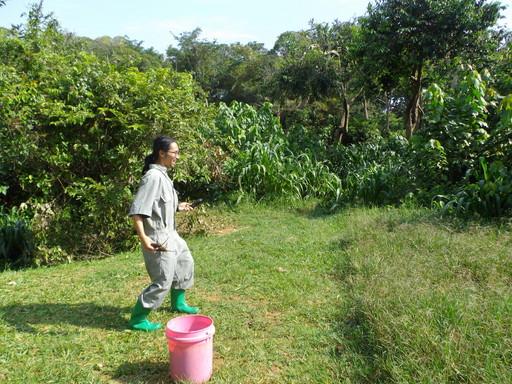 Throw eggplant in Chimp area