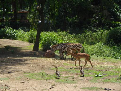 Zebra Area