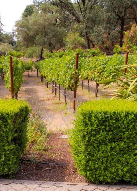 Beringer Petting Vineyard