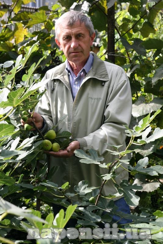 Які плодові культури добре ростуть на Прикарпатті
