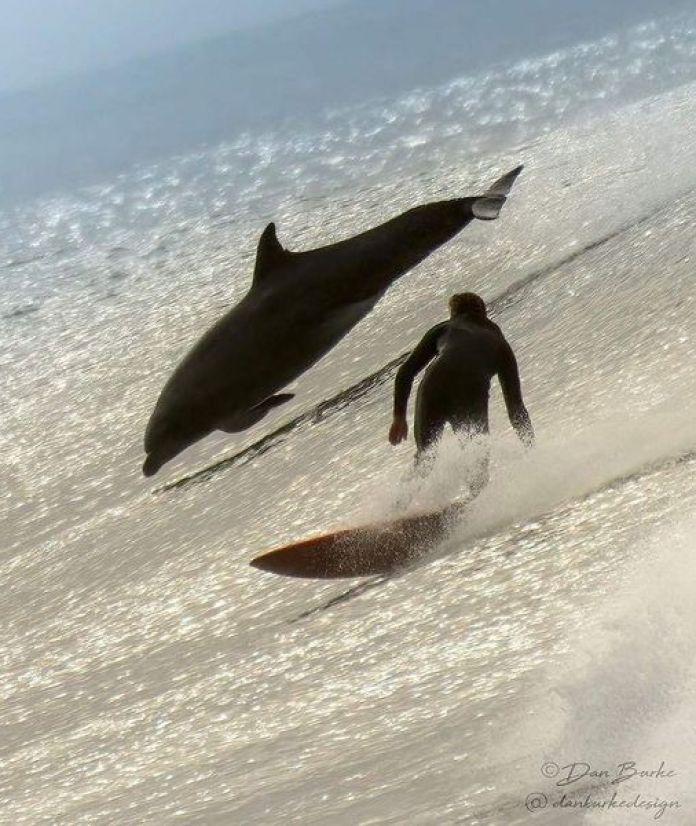 полет кита