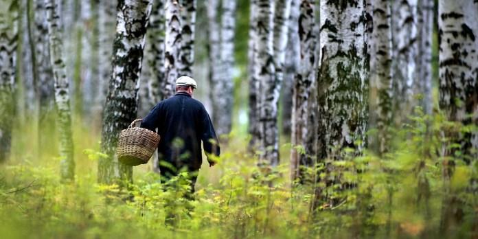 Як літній людині поводитися в лісі?