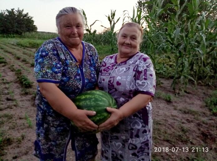Овощевод из Одесской области рассказала о самых крупных и урожайных сортах арбуза