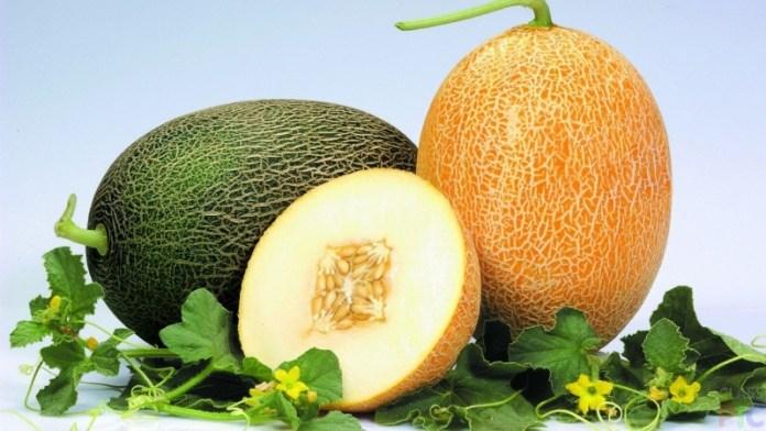 Что необходимо для успешного выращивания дыни