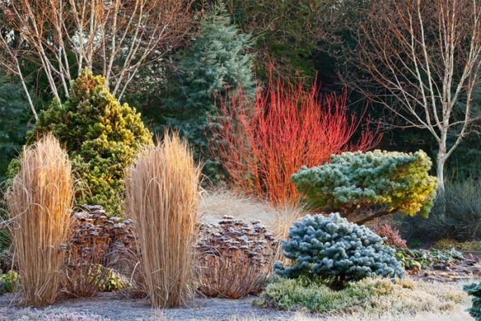 Зробимо зимовий сад яскравим і святковим