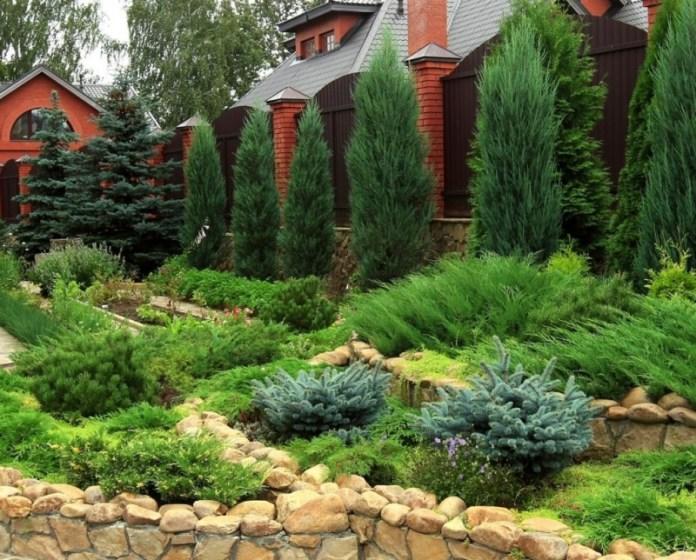 Хвойні рослини: від придбання до вирощування