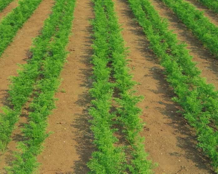 Три вопроса о посевах и схема посадки