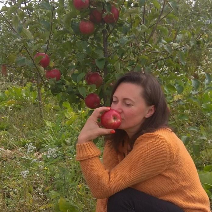 Какие сорта яблок выстояли жару и засуху