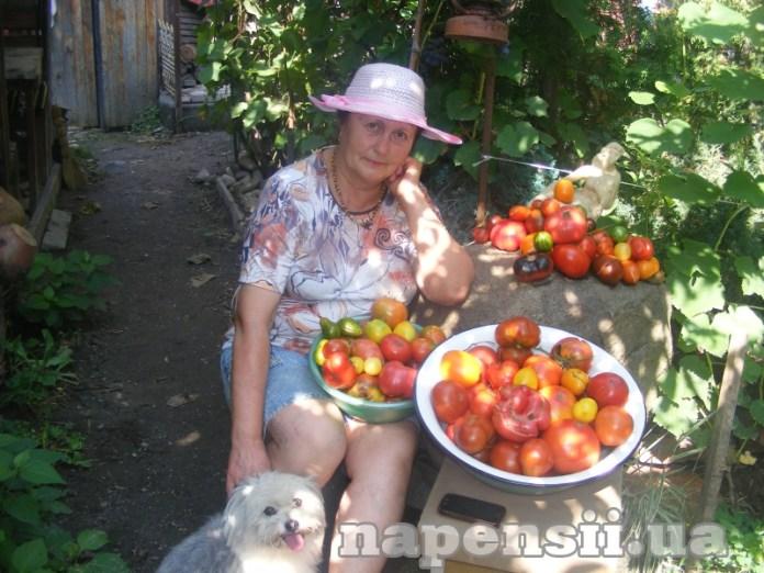 Як прискорити дозрівання томатів?