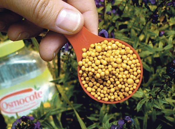 Опытный виноградарь рассказал о важных агроприемах на винограднике весной