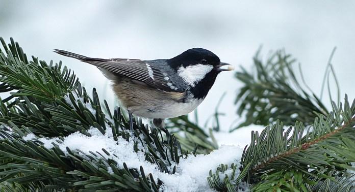 зима птица