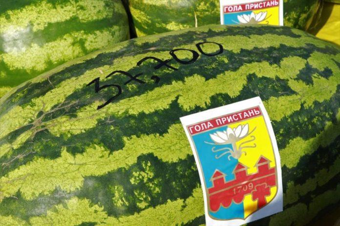 В Херсонской области вырастили арбуз с рекордным весом