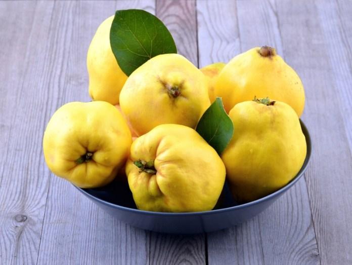 Айва дает до 100 кг плодов с дерева