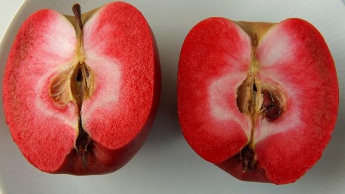 Селекционеры вывели яблоки с ароматом вишни