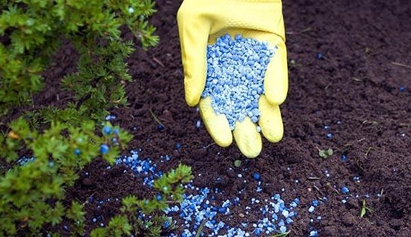 Хочешь с урожаем быть - нужно землю подкормить!
