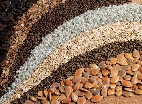 Эффективные способы подготовки семян к посеву