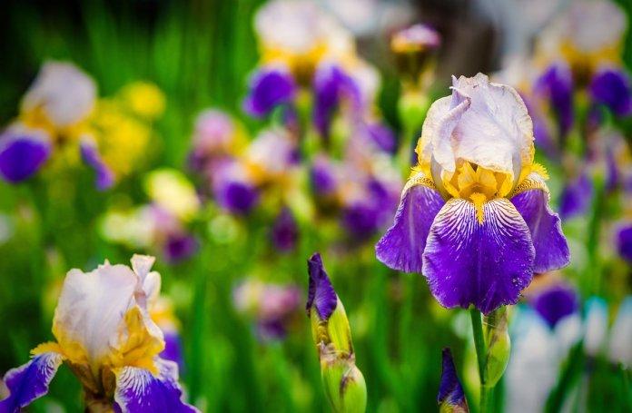 Цветы в память о маме