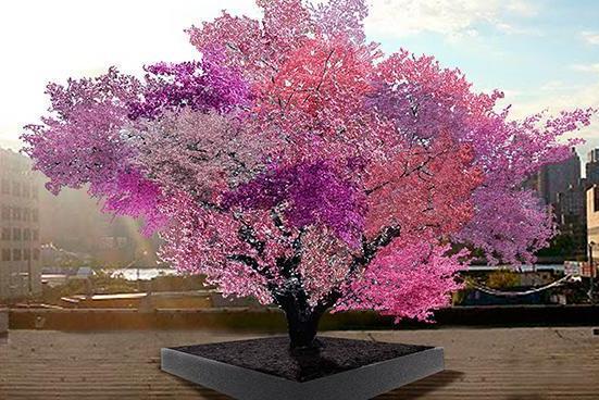 Американец выращивает деревья, на которых растут разные плоды