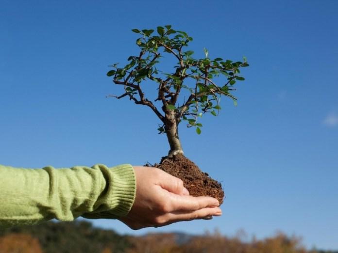 Когда уже нельзя сажать плодовые деревья?