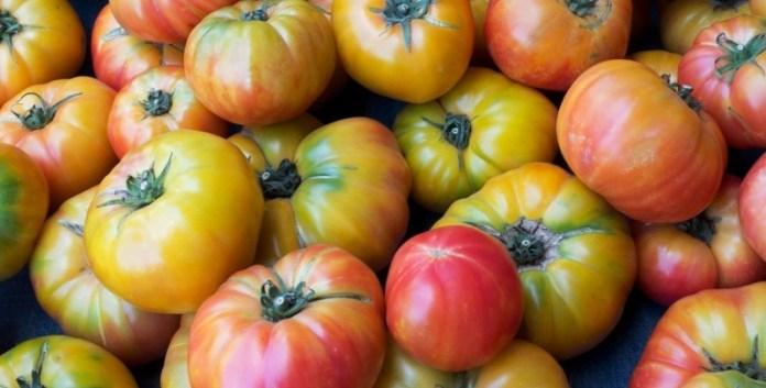 Как дозарить томаты?