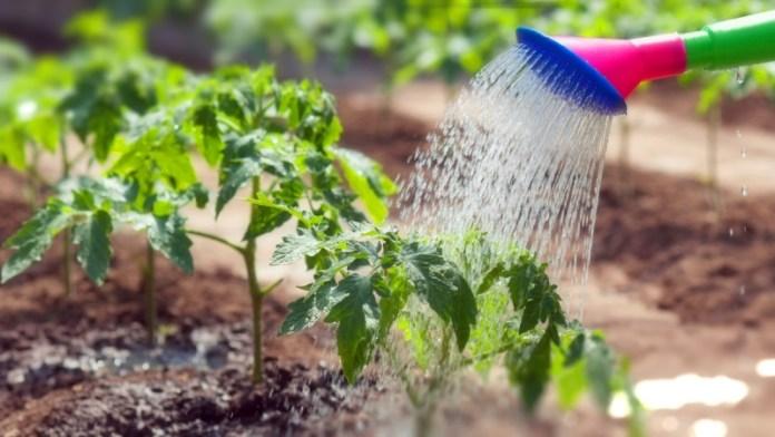 Как спасти растения от засухи и жары