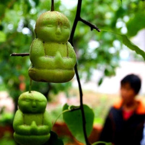 Китайский фермер вырастил груши, которые напоминают кукол