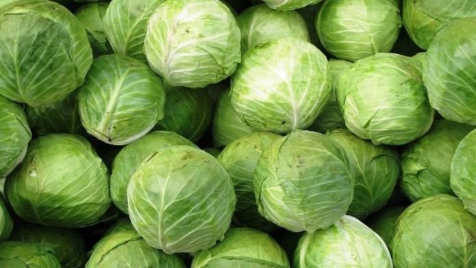 Аграрии собирают белокочанную капусту: урожай радует, цены — нет