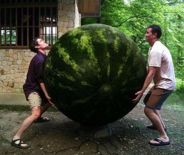 Херсонский фермер вырастил арбуз весом 119 кг