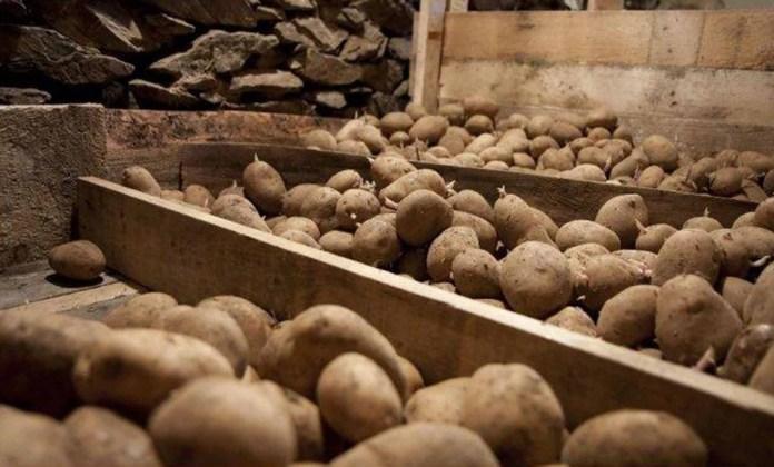 Як краще зберігати картоплю?