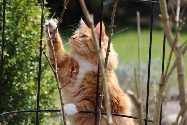 Прикарпатський садівник розповів про злісних ворогів актинідії та краще місце для садіння
