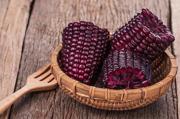Винницкий селекционер вывел новый сорт фиолетовой кукурузы