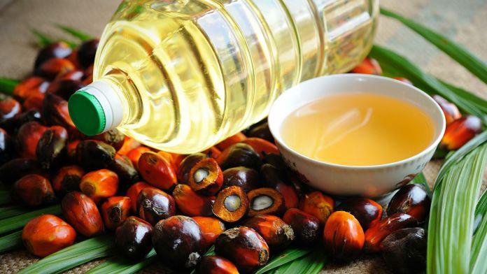 Підготовано законопроект про заборону пальмової олії