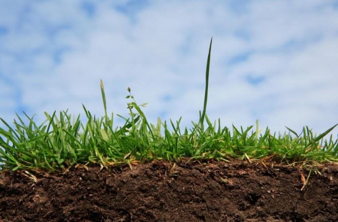 Как сделать почву в саду плодородной?