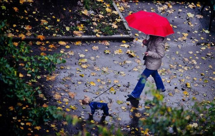 Погода в Україні на вівторок, 12 жовтня: хмарна…